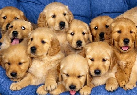 rubrique consacrer aux chiens