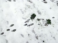 C'était l'hiver ...