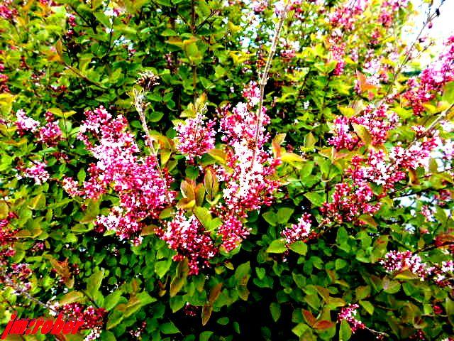 Une balade fleurie de confinés