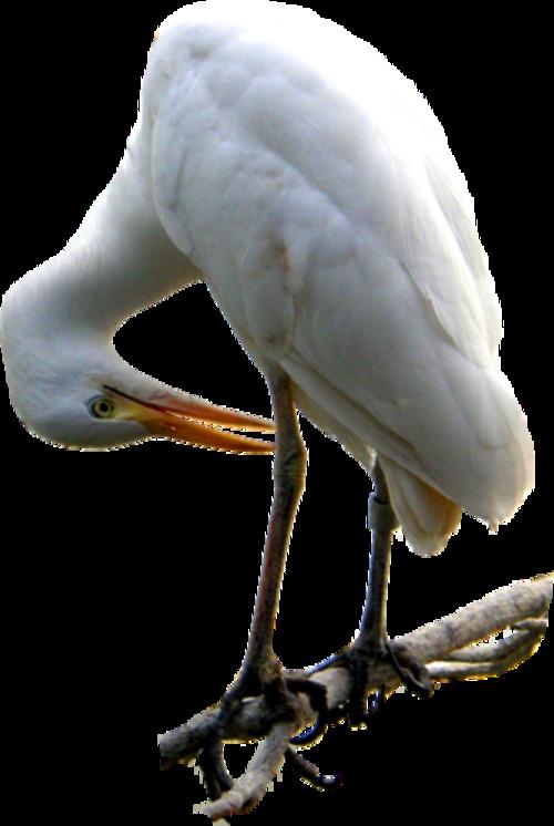 Oiseaux  ( exotique ) 2