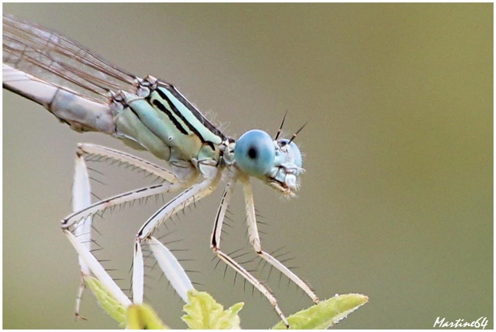 Insectes-05-7567b.jpg