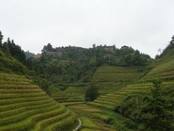 Les rizières en terrasses du dos du dragon