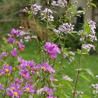 Journées des Plantes d'automne de Chantilly : Dans ma cariole il y a....