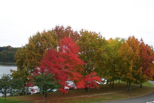 Couleur d'automne au bord de l'Erdre