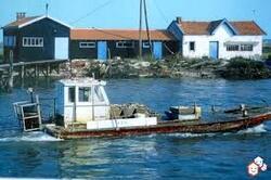la Tremblade ( charentes maritimes )