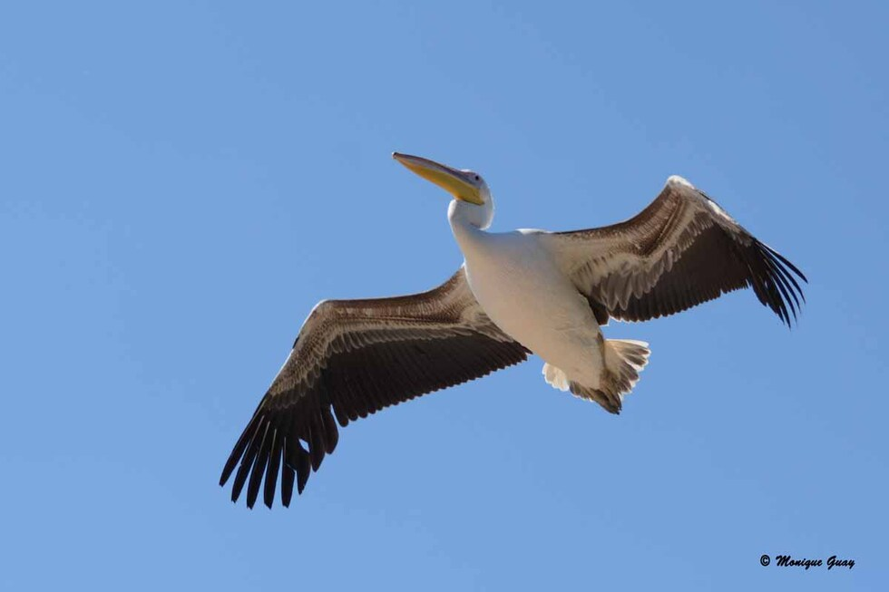 Oiseaux en vol au zoo de Beauval