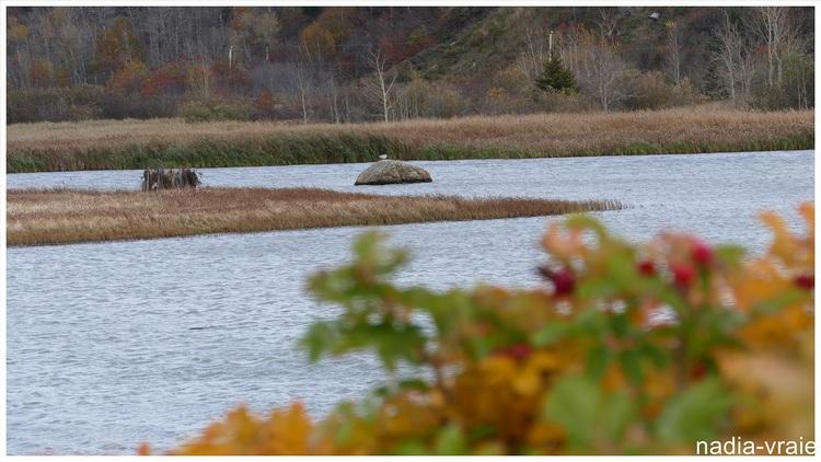 Photos d'automne dans le marais.
