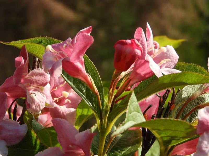 Escapade florale au jardin
