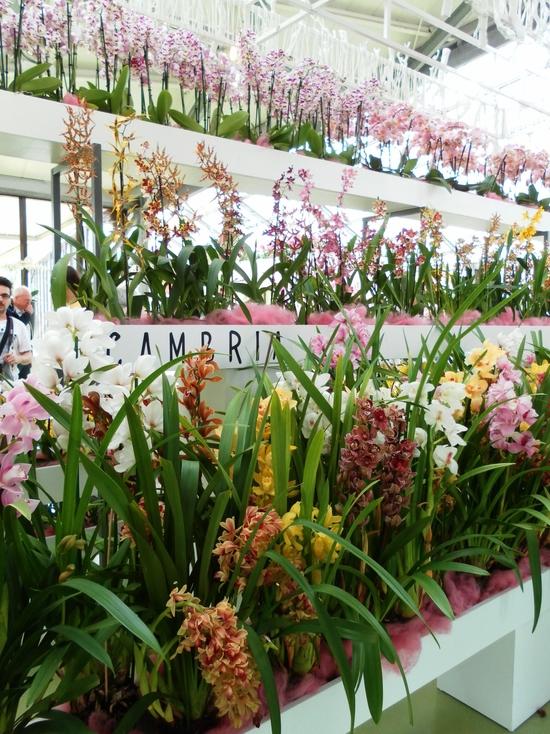 Keukenhof :  la serre des Orchidées et autres merveilles(1)