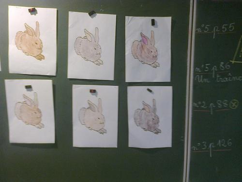 Maître Renart, les lièvres et les rhino vraiment féroces !