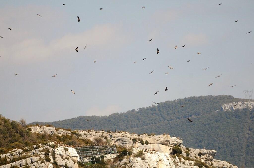 La montagne des vautours (2)...A suivre