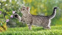 Chat dans la nature au printemps - Mamaw.fr