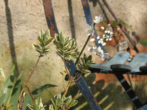 jardin brocante