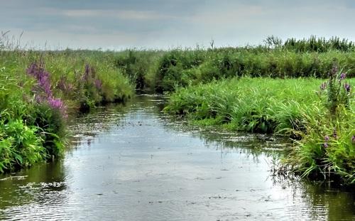 Marais du Cotentin 2