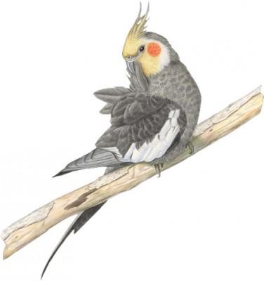 gifs oiseaux