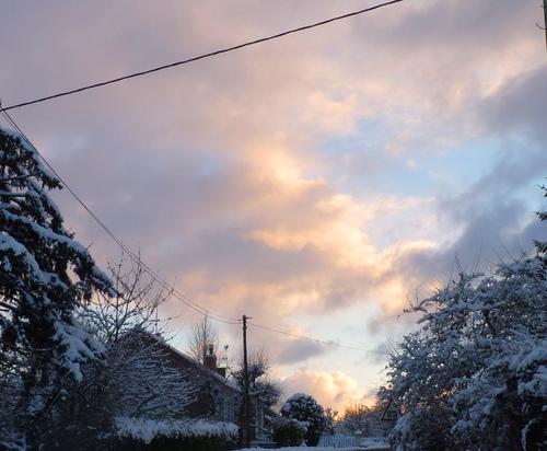 hiver dans le jardin de l'abbaye 2017 3