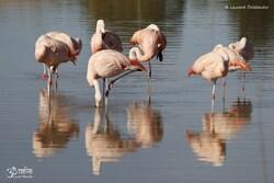 Oiseaux variés 6