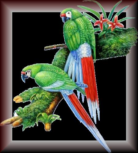 Tube d'oiseau 2965