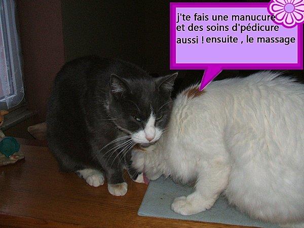 toilette_de_souris_et_diabolo_008-az.jpg