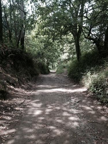 Chemin d'eucalyptus