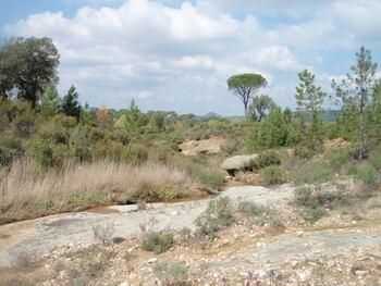 Paysage caractéristique de la Plaine des Maures