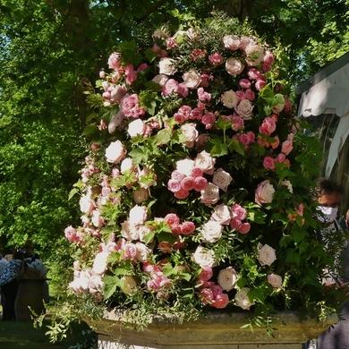 Des Journées de la Rose aux journées de mes roses...
