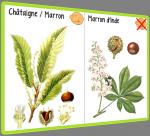 Marrons et châtaignes - CP/CE1