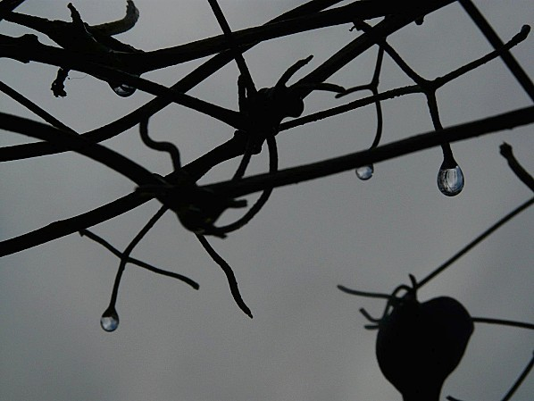 Gouttes-de-pluie---20-01-09.jpg
