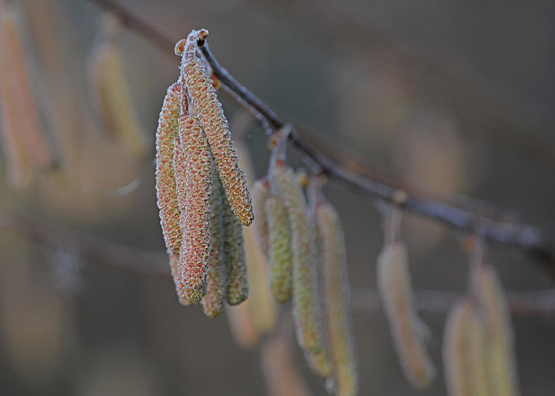 Gelée de printemps