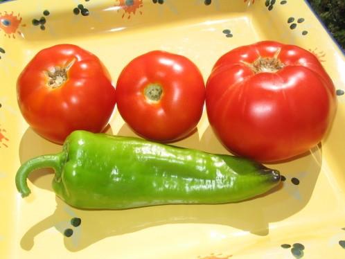 tomates 2008 004