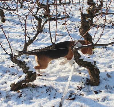 Blog de dyane :Traces de Vie, Mais si mais si...j'aime la neige!!