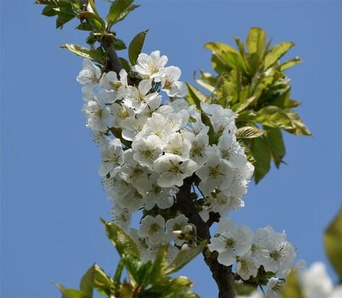 1ères fleurs du Printemps...