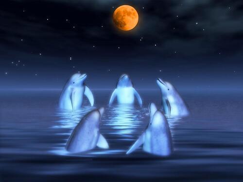 lune et dauphins