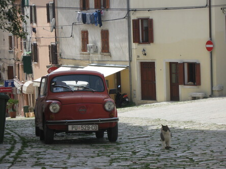 04 - Cats and car