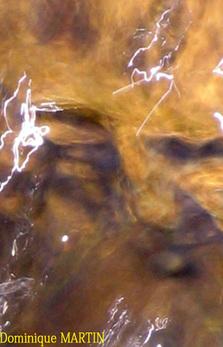 visage ressemblant à un lion endormi