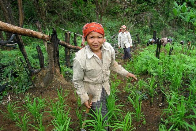 l'ONU souligne la contribution des forêts au développement durable