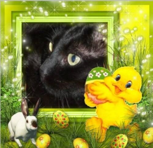 très bon dimanche de Pâques à tous ...