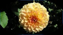 Virágom-virágom...