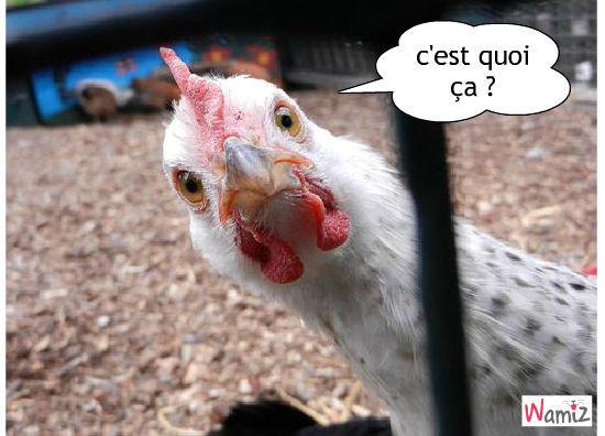 Panique au poulailler page 186 big farm forum - Photos poules rigolotes ...