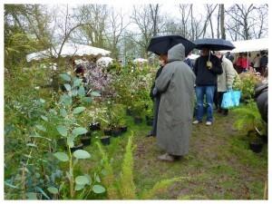Botaniques de Chèvreloup avril2010026