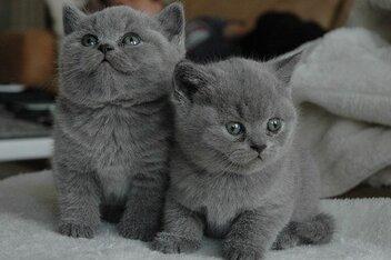Jeune Chat, Chat, Chats