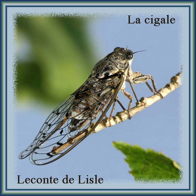 """"""" La cigale """" poème de Leconte de Lisle"""