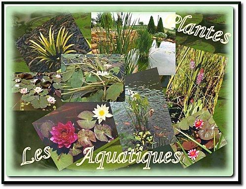 montage-plantes-aquatiques.jpg