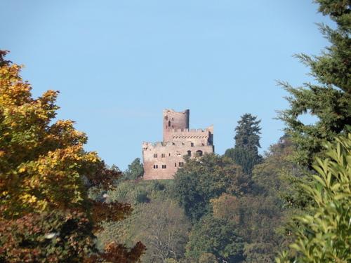 Le château de Kintzheim et la Volerie des Aigles