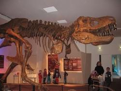 Sur les pas des dinosaures à Dinard