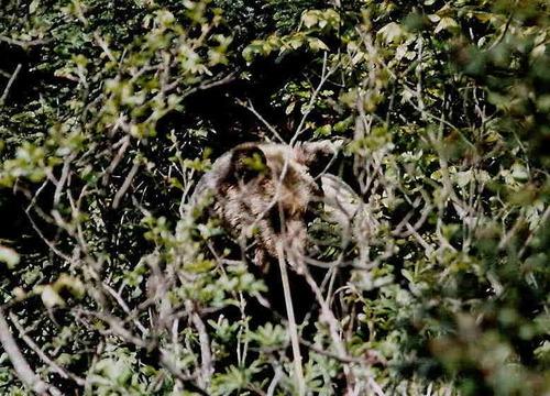 Nouveauté 2019 : Séjour dans les Carpates roumaines pour observer la faune sauvage et notamment les ours