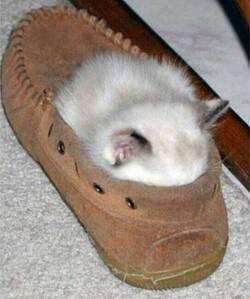 Les Petits Félins 2:  29 images cocasses de petits félins - les chats