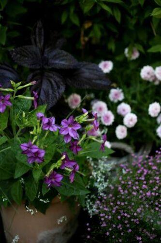 Un jardin en pots