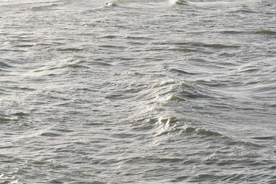Toujours au lac du Der