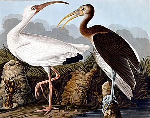 audubon gallery 42